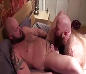 Hairy gay man getting sucked