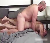 Polvazo entre novios peludos