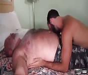 Oso peludo penetrado
