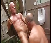 Mature muscled gent getting his huge cock sucked