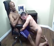 Sucking the big black boss on the chair