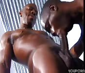 Black guys work out their dicks